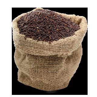 Brassica seeds